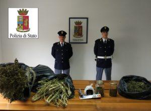 foto-marijuana-sequestrata-1